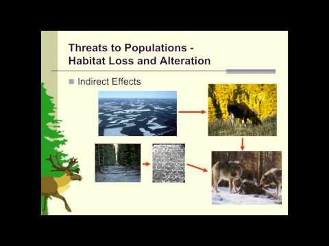 Dr. Fiona Schmiegelow - Boreal Caribou: Ghosts of Forest Past?
