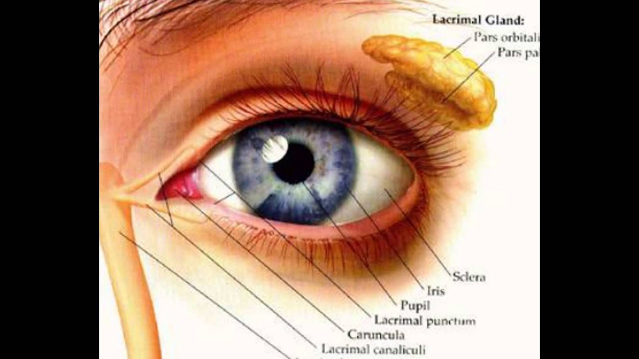 Anatomy Around The Eye - YouTube