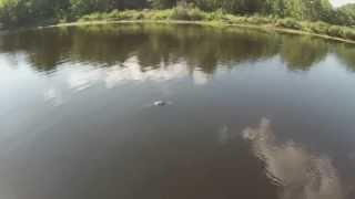 Gator Bait Dji Phantom Gopro Hero 3 Alligator Florida Swamp Fpv Quadcopter Over Water