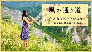 【My neighbor TOTORO】Kaze no Tori Michi【Sax cover - となりのトトロ】