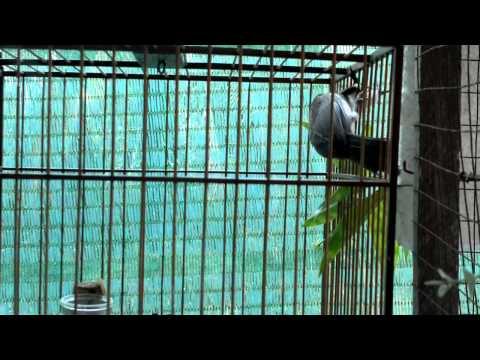 Chim con nuoi de.mp4