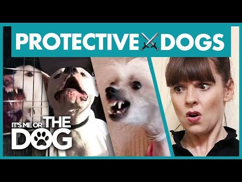 The Most Overprotective Dogs | Best of It's Me or the Dog