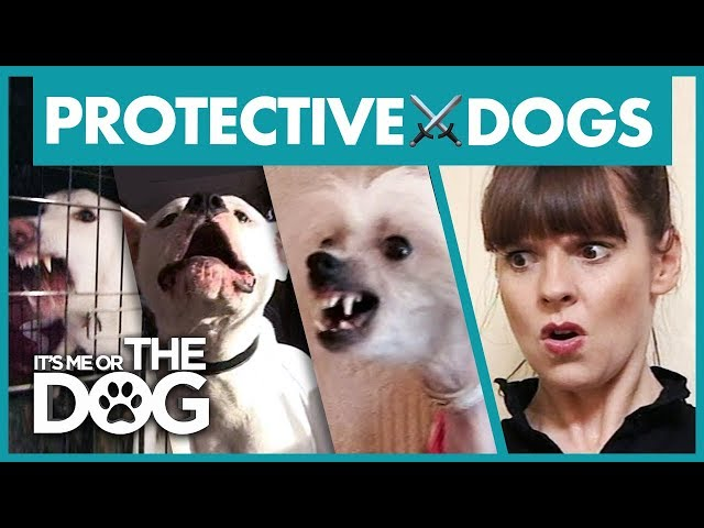 The Most Overprotective Dogs | Best of Its Me or the Dog