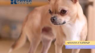 Сколько стоит собака?