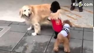 Горячие Животные СПАРИВАЮТСЯ!!Смешное видео