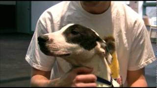 Adopted! Zada, Bull Terrier Mix Puppy For Adoption In Indianapolis