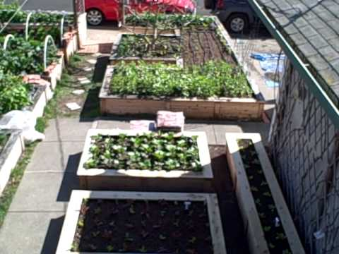 Winter Gardening In Northern California Overhead View Of My 1 10th Acre Victory Garden Youtube