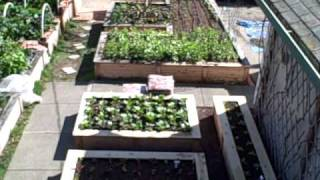 Winter Gardening in Northern California Overhead view of my 1/10th Acre Victory Garden