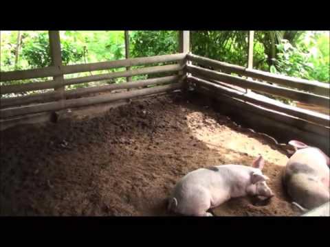 Maribojoc Organic Demo Farm   Nov 2015   Bohol Pt6
