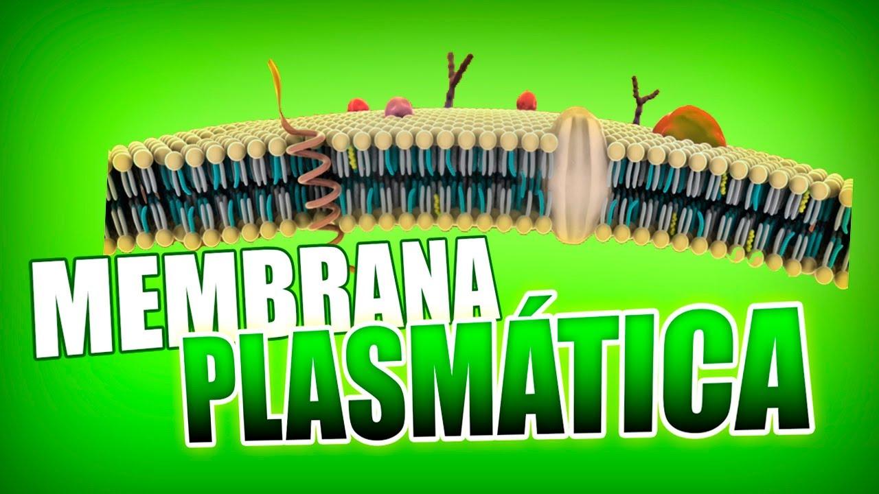 Membrana Plasmática Estructura Modelo De Mosaico Fluido Y Renovación Biología Humana