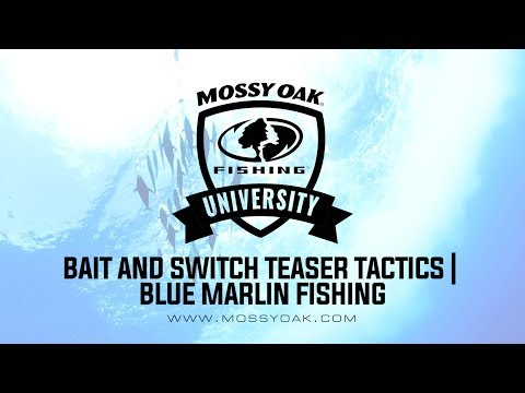 Bait And Switch Teaser Tactics - Blue Marlin Fishing
