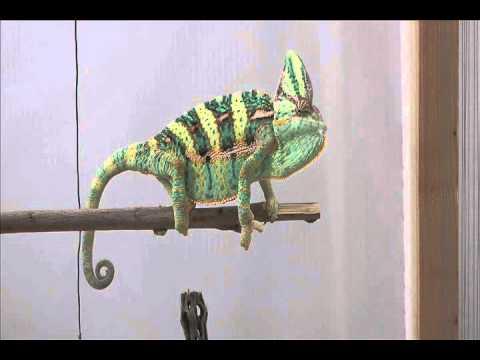 Charming Chameleon Pattern Amigurumi Crochet PDF | Etsy | 360x480