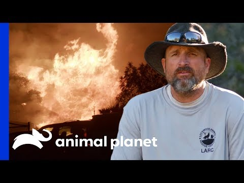 450 Animals Saved From California Wildfire | Wolves And Warriors