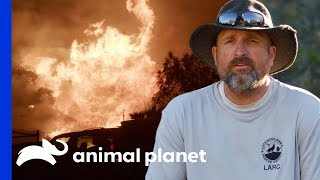 450 Animals Saved From California Wildfire   Wolves and Warriors