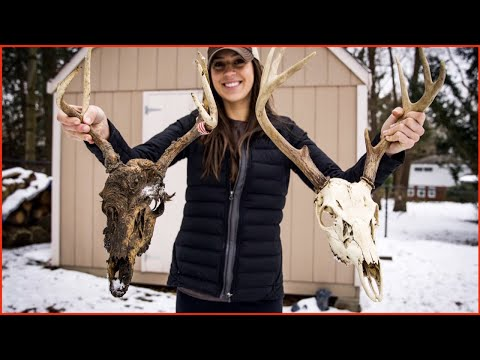 BURYING A DEER SKULL! Does it work??