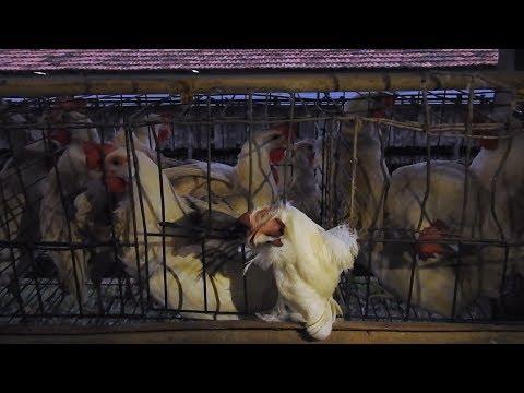 MFA Cracks Open Brazil's Brutal Egg Industry