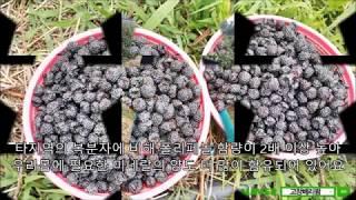[복분자원액잘 고르는 방법] 베리팜복분자원액