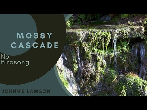 Forest Waterfall Nature Sounds W/O Birds Singing-Relaxing Soothing Sound of Water Meditation