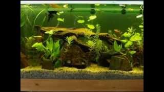 Diy Aquarium Decor Ideas