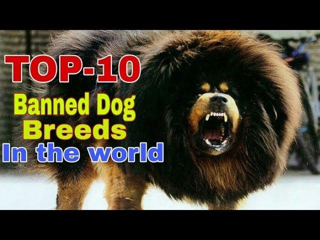 TOP - 10 Banded Dog Breed In The World / Banned Dog Breed / Aryan Dog Club  Aryandogclub