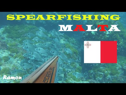 Spearfishing Malta - Sea Breams And Brown Meagre - Pesca In Apnea Corvine E Saraghi