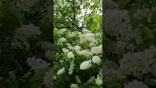 Весна на Трухановом острове в Киеве. #shorts