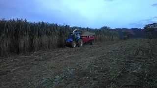 Trator New Holland TL 75 Com Forrageira Nogueira 12 Facas