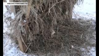 Донской край славится разведением редких животных