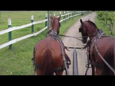 Song Breaks out during Horse Carriage Ride in Costa Rica