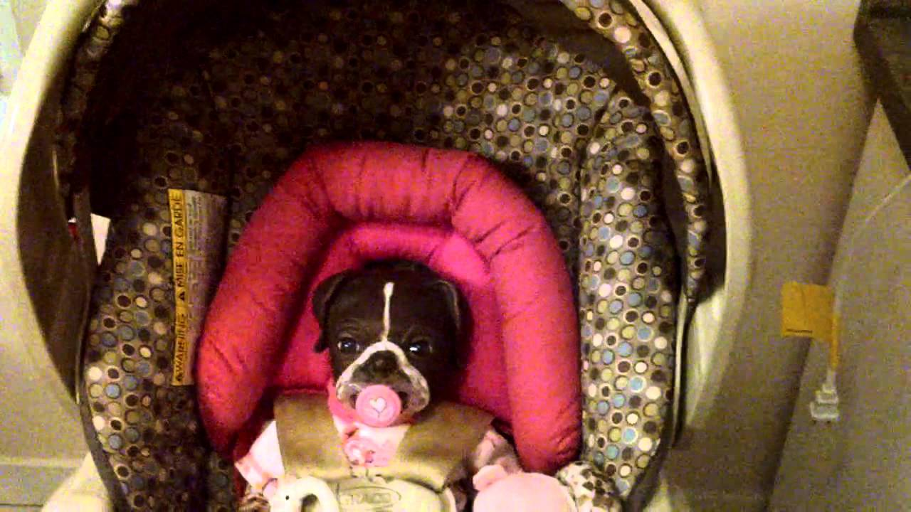 reborn puppy in carseat youtube. Black Bedroom Furniture Sets. Home Design Ideas