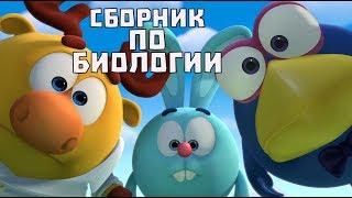 Сборник по биологии - Смешарики. ПИН - код | Познавательные мультфильмы