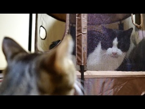 猫の謎の攻撃 – Epic Cat Attack –