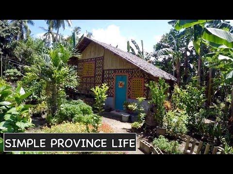Traditional home - Nipa house - Carabao calf update - Philippine daily life