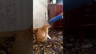 Никогда не трогайте кошек вот что бывает