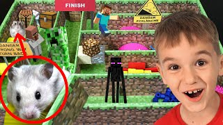 Максим играет с хомяком в лабиринте из Майнкрафта