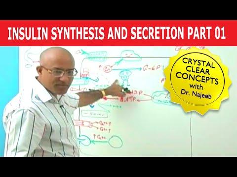 Of Dr Najeeb Videos free download