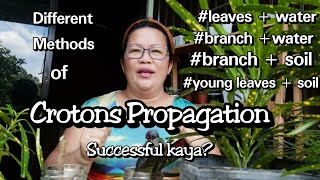 Crotons Propagation With Different Methods: Lola Malyn Experiment