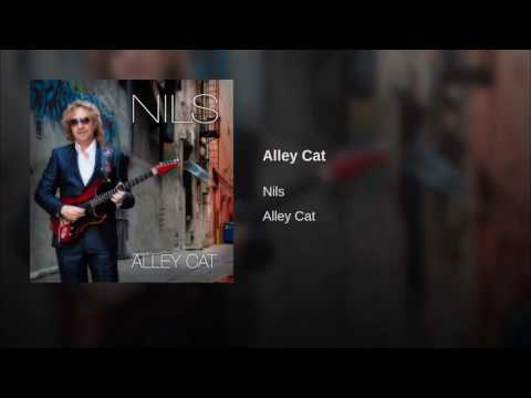 Nils - Alley cat