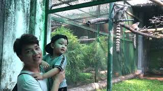 các con vật cho bé thík xem, clip hot, animal kid