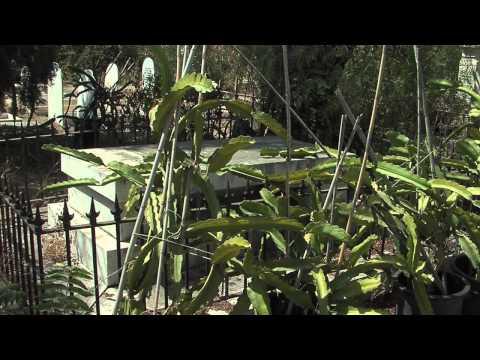 The English Cemeteryin Malaga, HD