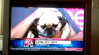 Pug Nation Rescue Of Los Angeles