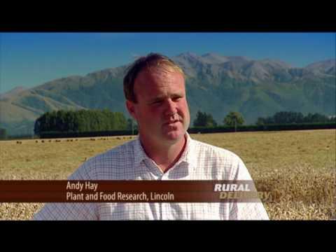 High Yield Wheat Crop