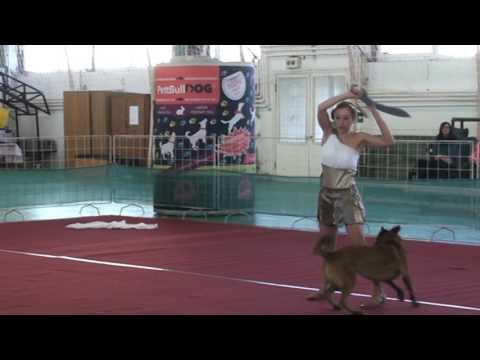 8. PettBull Dog Dancing Hungarian Open - 2016. Hatvan