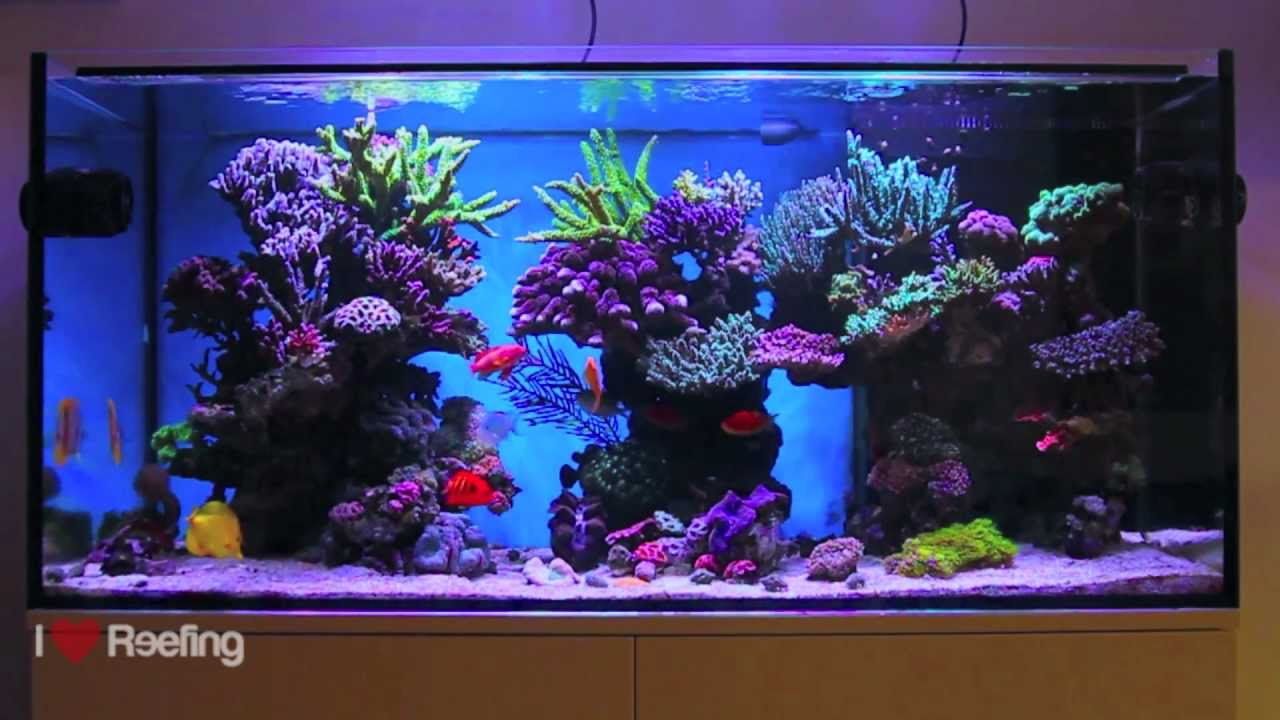 Schwings reef tank 500l 130gal powered by ecotech for Acheter aquarium recifal