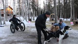 Noble Paws - Dog Mushing For All Abilities