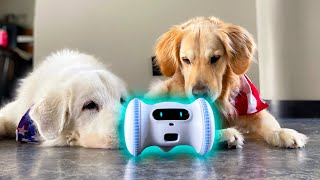 DOG FRIENDLY ROBOT! (Super Cooper Sunday #257)