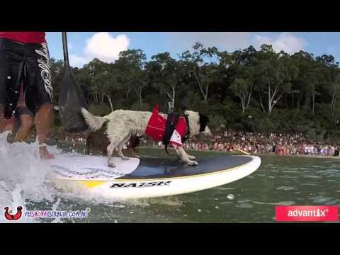GoPro: 2015 Surfing Dog Spectacular, Noosa, Australia.