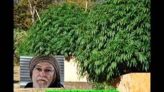 Marijuana Music Video: The Keeper In Modoc County California