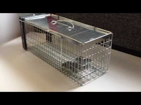 How To Set The Big Cheese Stv075 Rat Cage Trap Youtube
