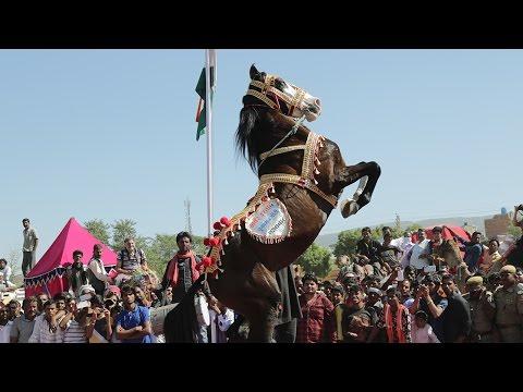 🐎 Horse Dance At Pushkar Fair /Mela – Rajasthan India